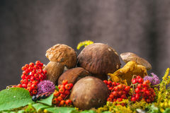 Autumn still life of mushrooms Royalty Free Stock Images