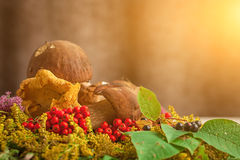 Autumn still life of mushrooms Royalty Free Stock Photography