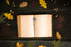Autumn still life. Open book, autumn leaves and cornflower over wooden background. Royalty Free Stock Photography