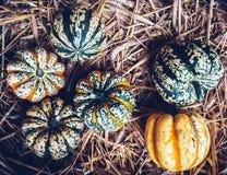 Autumn still life with organic pumpkins. Stock Images
