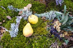 Autumn still life pear Stock Photography