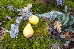 Autumn still life pear Stock Photography