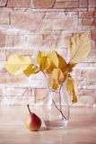 Autumn still life. Stock Images