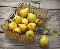 Autumn still life with pears harvest Stock Image