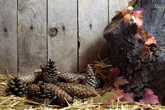 Autumn Still Life with Pine Cones and Autumn Leaves on a Hay, Wooden Planks Background Stock Photos