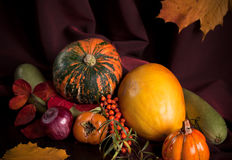 Autumn still life with pumpkin. Over dark background stock photography