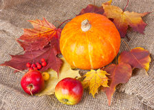 Autumn still life with pumpkin. Fruit, pumpkins and autumn leaves Royalty Free Stock Photo