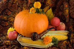 An autumn still life with pumpkin and corn. An autumn still life with pumpkin, corn, flowers, apples and a pipe Stock Images
