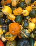 Autumn pumpkin still life Royalty Free Stock Photos