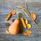 Autumn pumpkin still life Stock Images