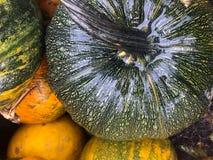 Autumn pumpkin still life Royalty Free Stock Photography