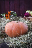 Autumn still life with pumpkin stock images