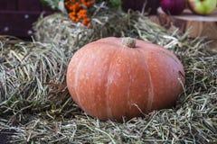 Autumn still life with pumpkin stock photo