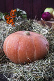 Autumn still life with pumpkin royalty free stock image