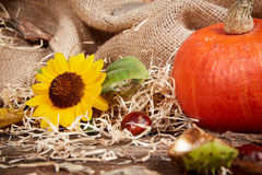 Autumn still life with pumpkin and sunflower Stock Images