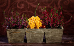 Autumn still-life with pumpkins Royalty Free Stock Photo