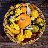 Autumn still-life with pumpkins Stock Image