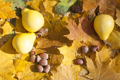 Autumn still life with pumpkins and acorns on autumn leaves background, closeup Royalty Free Stock Photography