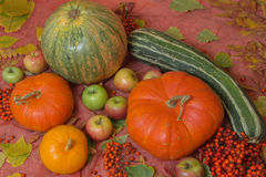 Autumn still life with pumpkins and apples. Autumn still life with pumpkins, apples and rowan Royalty Free Stock Images