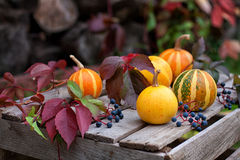 Autumn still life of pumpkins and autumn leaves Stock Image