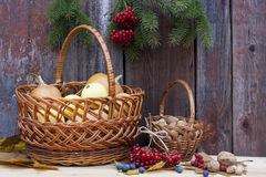 Autumn still life with pumpkins in basket and autumn berry on old wooden background, closeup. Selective focus Royalty Free Stock Photography