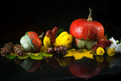 Autumn still life with pumpkins, chrysanthemums, fir cones and chestnuts, and yellow maple leaves on a dark background with mirror Royalty Free Stock Photos