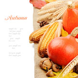 Autumn still-life with pumpkins and corn Royalty Free Stock Photos