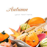 Autumn still-life with pumpkins and corn Stock Photos