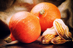 Autumn still-life with pumpkins. And corn stock images