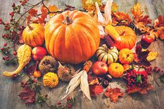 Autumn still life with pumpkins, corn cobs and berries stock photography
