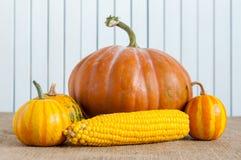Autumn still life pumpkins, corns against the Stock Photography