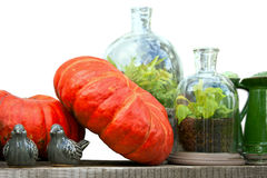 Autumn still life with pumpkins, glass jars with plants and cera Stock Photo