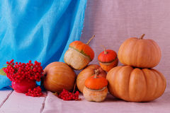 Autumn still life. Pumpkins for Halloween and Thanksgiving Day. Royalty Free Stock Photography