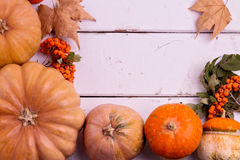 Autumn still life. Pumpkins for Halloween and Thanksgiving Day. Stock Photo