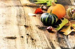 Autumn still-life with pumpkins and oak leaves Stock Image
