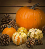 Autumn still life with pumpkins and pine cones Royalty Free Stock Photography