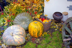 Autumn still life with pumpkins Stock Photography