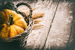 Autumn still-life with pumpkins stock images