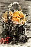 Autumn still-life with pumpkins Royalty Free Stock Images