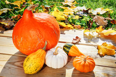 Autumn still-life with pumpkins in sunlit garden Royalty Free Stock Images