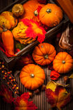 Autumn still life with pumpkins Royalty Free Stock Photography