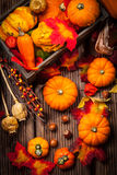Autumn still life with pumpkins Royalty Free Stock Image