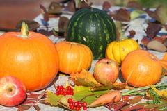 Autumn still life. Pumpkins, water-melon, apples, carrots and autumn leaves Stock Photo