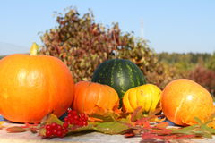 Autumn still life. Pumpkins, water-melon, apples, carrots and autumn leaves Stock Photos