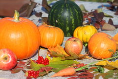 Autumn still life. Pumpkins, water-melon, apples, carrots and autumn leaves Royalty Free Stock Images