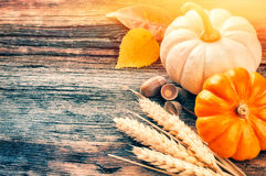 Autumn still-life with pumpkins and wheat in rustic setting Stock Photos