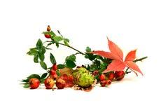 Autumn Still Life 2 Stock Photo