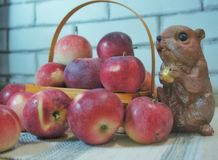 Autumn still life. A squirrel near the basket with apples royalty free stock photography