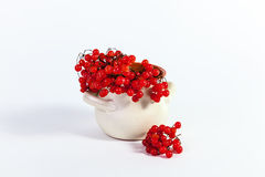 Autumn Still Life-stralenviburnum Royalty-vrije Stock Afbeelding