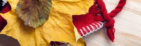 Autumn Still Life-Strickmützegeschenkblätter und getrocknete Beeren lizenzfreie stockbilder